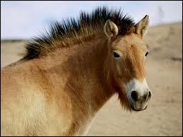 A quand remonte la domestication du cheval par l'homme ?