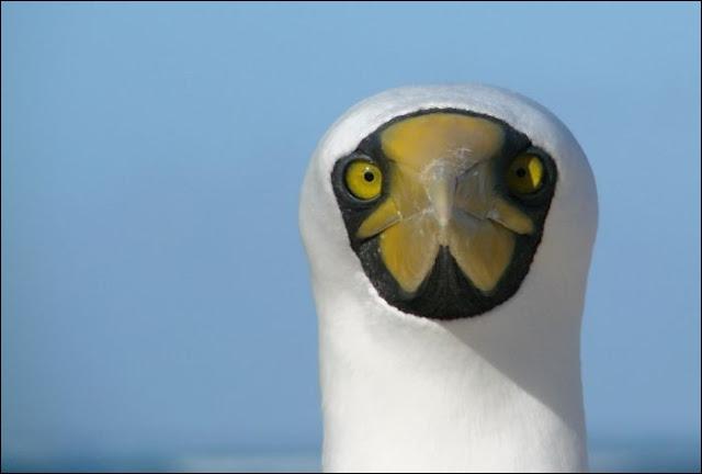C'est une question complètement démente que je vous pose, quel est le nom de cet oiseau ?