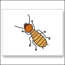 Quel est le genre du mot  termite  ?