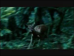De quoi parle Bella au début du film ?