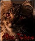Je suis la chatte de Rusard, mon nom en V. O. est...