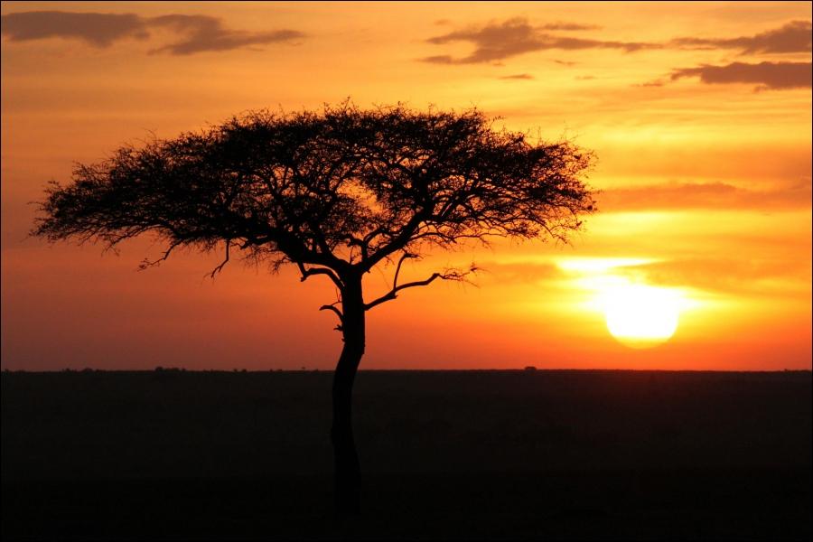 Quizz animaux du kenya 1 quiz photos savane animaux - Le soleil se couche a quel heure ...