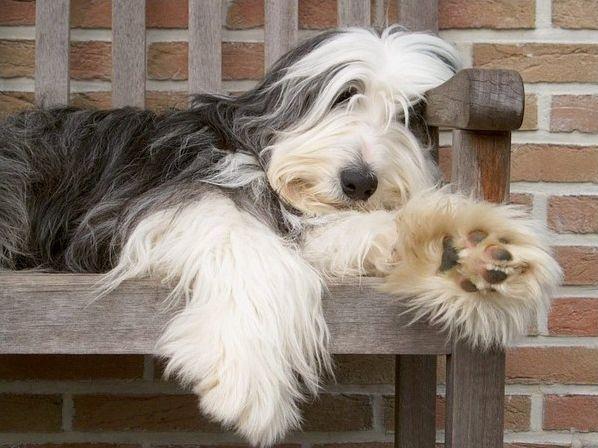 Animaux : races de chiens