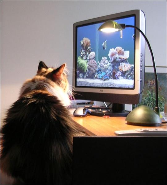 Quel animal regarde le chat, sur l'écran ?