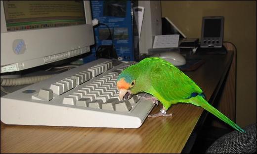 """Il a choisi le thème """"Oiseaux"""" !"""