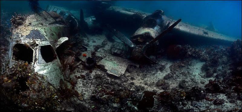 Quel animal peut habiter dans ce paysage sous-marin ?