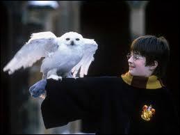 Comment Harry Potter reçoit-il son courrier à l'école des Sorciers ?