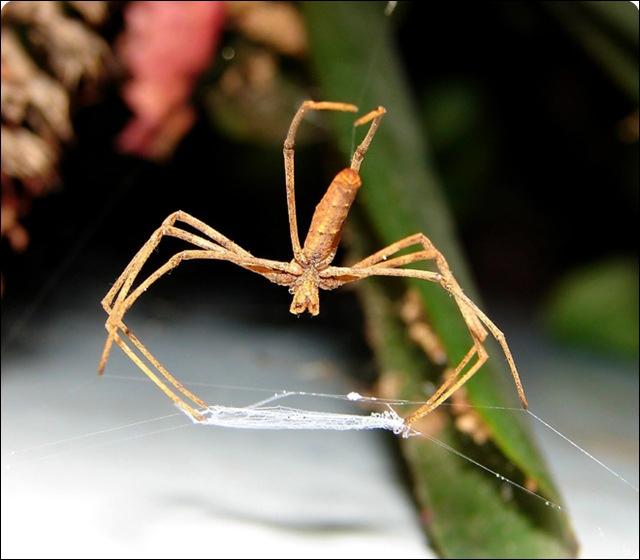 Que vous rappelle cette araignée ?