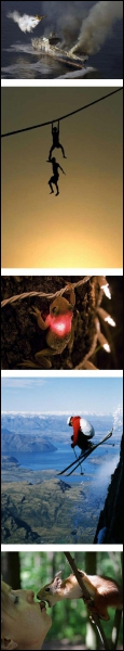 Comme la 3ème photo vous le prouve, il existe une variété de grenouille qui peut luire comme une luciole !