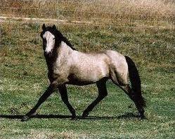Les races de chevaux