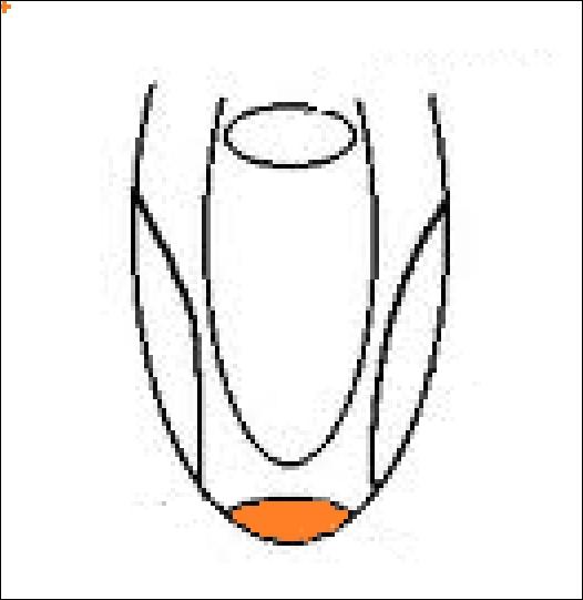 Quelle saveur est associée à la papille orangée sur le dessin, juste au bout de la langue ?