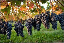 Une de ces appellations viticoles n'est pas bourguignonne. Laquelle ?