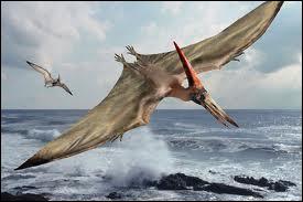 Le ptérodactyle vivait il y a 150 millions d'années . Il volait au-dessus de l'Europe, de l'Afrique et de l'Asie . C'était un ...