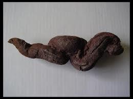 Au cours d'une expédition paléontologique , j'ai trouvé des coprolithes de dinosaure . Qu'est-ce que c'est ?