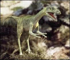 Le compsognathus est l'un des plus petits dinosaures connus à ce jour . Il était de la taille ...