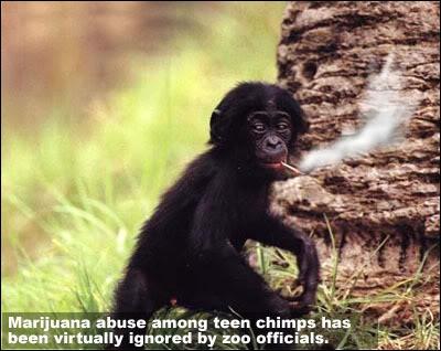 Il ne devrait pas, mais il fume !