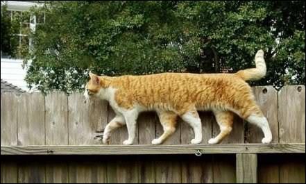Ce chat est né avec six pattes !
