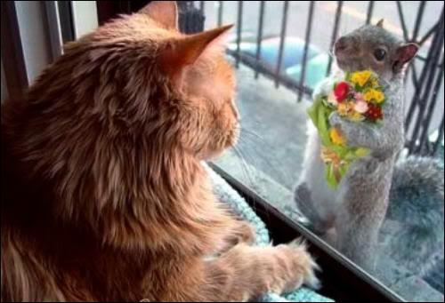 Pourquoi l'écureuil vient-il voir la chatte ?