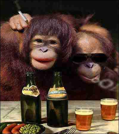 Quels sont ces singes ?