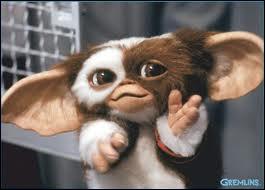 Pour rappel, il est vivement déconseillé de lui donner à manger après minuit... Qui est ce petit poilu aux grandes oreilles ?