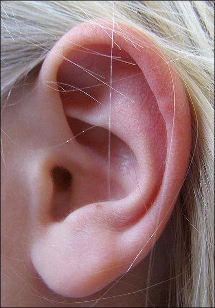 Entre l'oreille externe et l'oreille interne, l'oreille moyenne comprend le tympan et de petits os. Cochez celui qui ne fait pas partie de ces osselets.