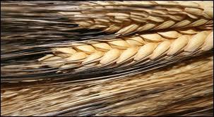 Les fibres alimentaires ne fournissent pas d'énergie; elles