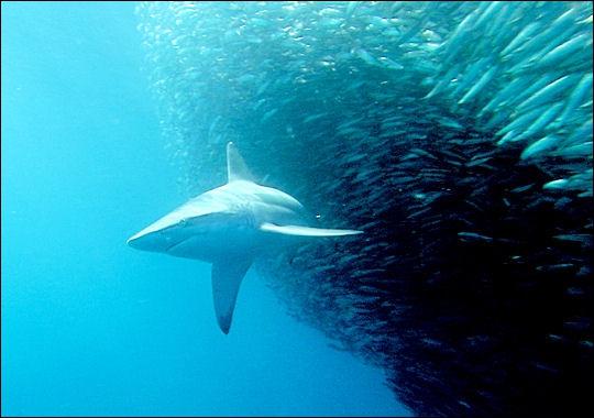 Quizz les poissons quiz poissons mer - Grand poisson de mer ...
