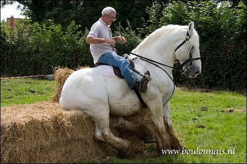 Cette race est sûrement issue du cheval arabe. Il est principalement élevé sur la côte de la Manche. Sa robe est souvent grise plus rarement noire ou alezane. Ce cheval est :