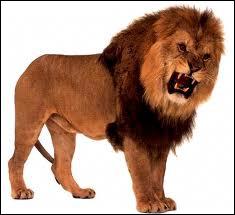 Lion' est un mot :