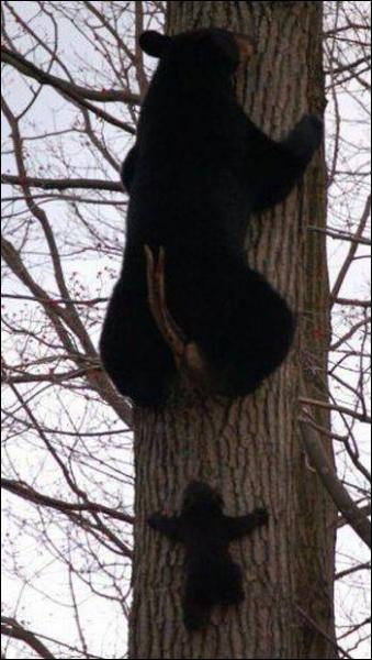 Comment est surnommé l'ours dans  Le roman de Renart  ?