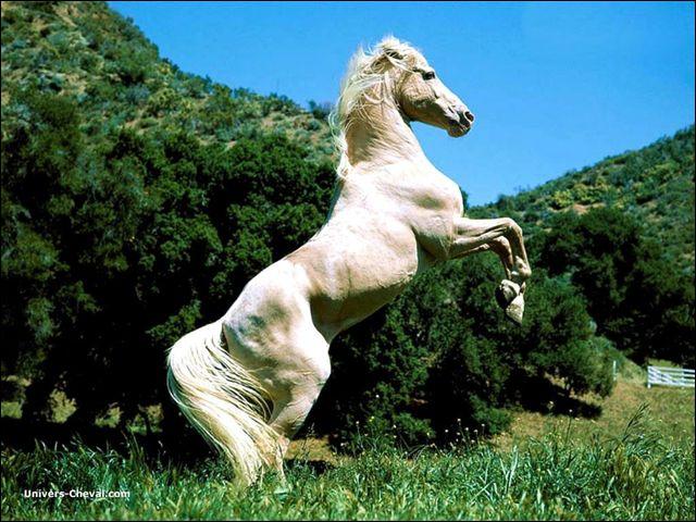 Quelle figure exécute ce cheval ?