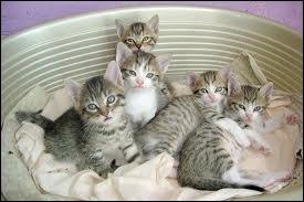 Combien y a-t-il de chats ?