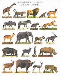 Combien y a-t-il d'animaux ?