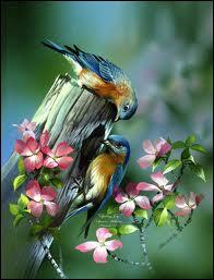 """Retrouvez le nom des oiseaux qui viennent faire leur nid dans la très ancienne chanson """"Auprès de ma blonde"""" : """" Dans les jardins de mon père, les lilas sont fleuris... """""""