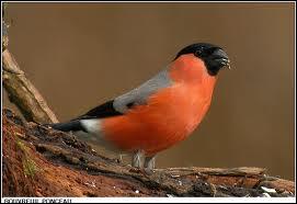 Quel est ce bel oiseau ?