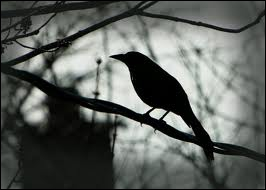 """Qui interprétait """"L'oiseau de nuit"""", titre de l'album """"Le chanteur"""" ?"""