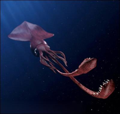 Quel est le nom de ce calamar (Mesonychoteuthis hamiltonii) de plus de 9 m de long ?