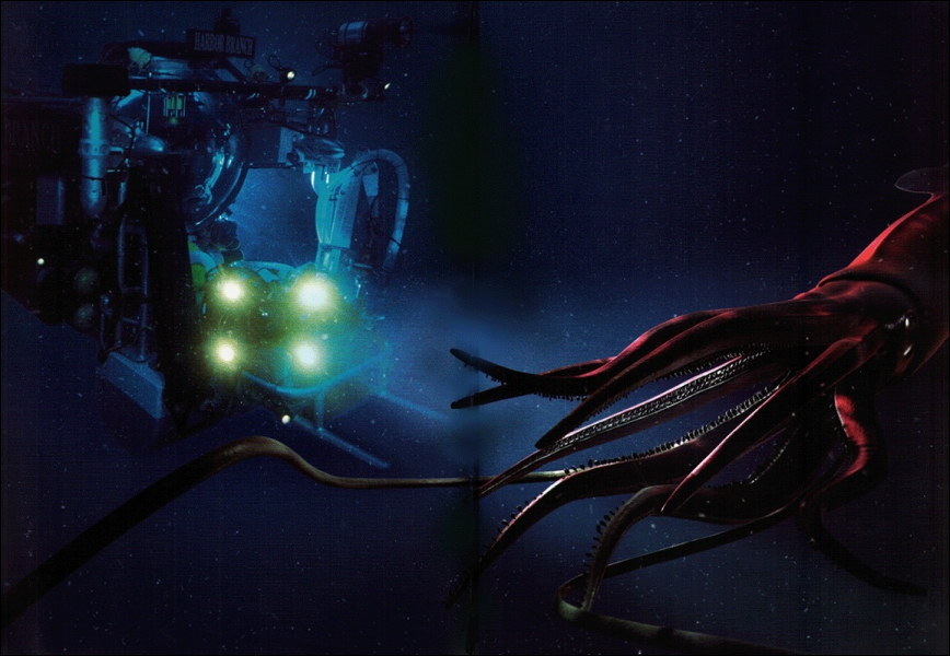 Combien de mètre peut faire le légendaire calamar géant (Architeuthis dux) ? Contrairement au mythe c'est un animal craintif qui fuit le contact et ne se nourrit que de petits animaux.