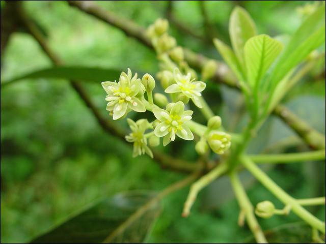 Quelle est cette délicate fleur verte ?