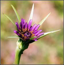 Cette jolie fleur couronnée est celle ?