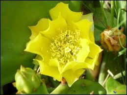 Le jaune superbe de la magnifique fleur ?