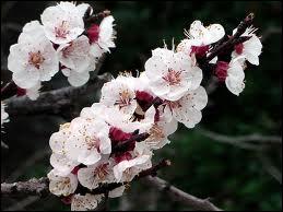 Des fleurs très fournies pour un fruit oblong et délicieux, lequel ?