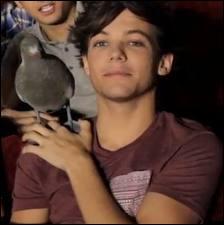 Comment s'appelle le pigeon de Louis ?