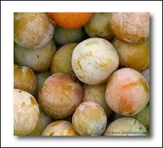 Cherchez l'intrus parmi ces variétés de prunes :