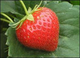 Laquelle n'est pas une fraise ?