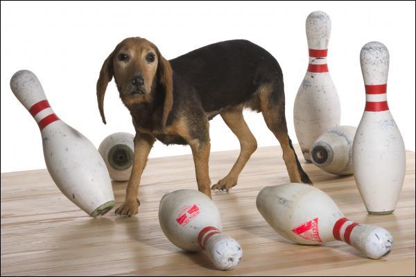 Que vient faire ce chien qui arrive de manière incongrue au milieu du quiz ?