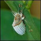 Insecte parasite d'Amérique du sud qui se nourrit de Cactus, et dont l'acide produit une teinture rouge , quel est son nom ?