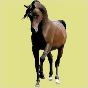 Quel est le prix maximum que tu peux donner à un cheval quand tu le mets aux enchères ?