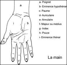 Combien dénombre-t-on d'os dans la main ?