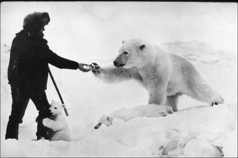 L'ours blanc est albinos !